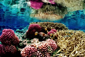 Colorful_underwater_landscape_of_a_coral_reef-1