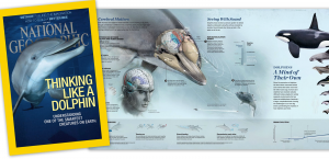 Dolphins_NatGeo_with-cover (1)